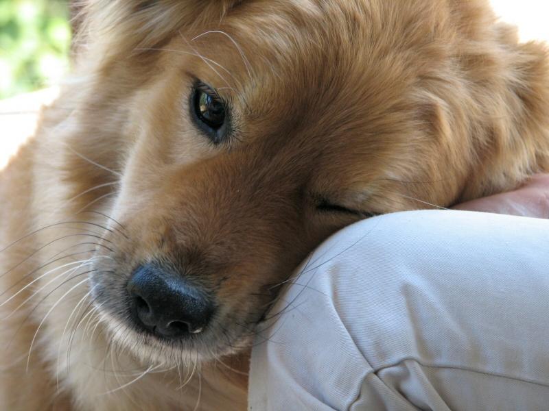 Pot animalele de companie sa reduca stresul?