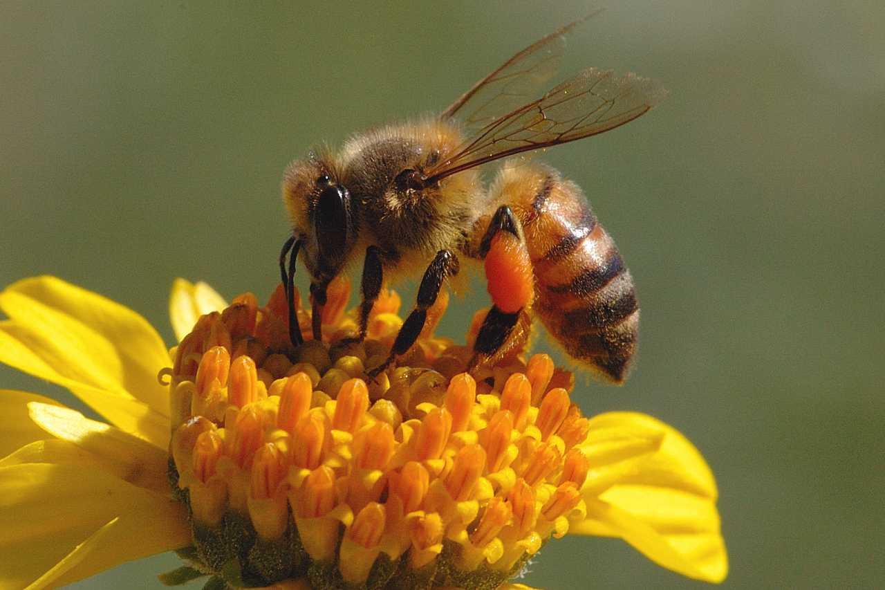 Top 15 lucruri fascinante despre albine si miere